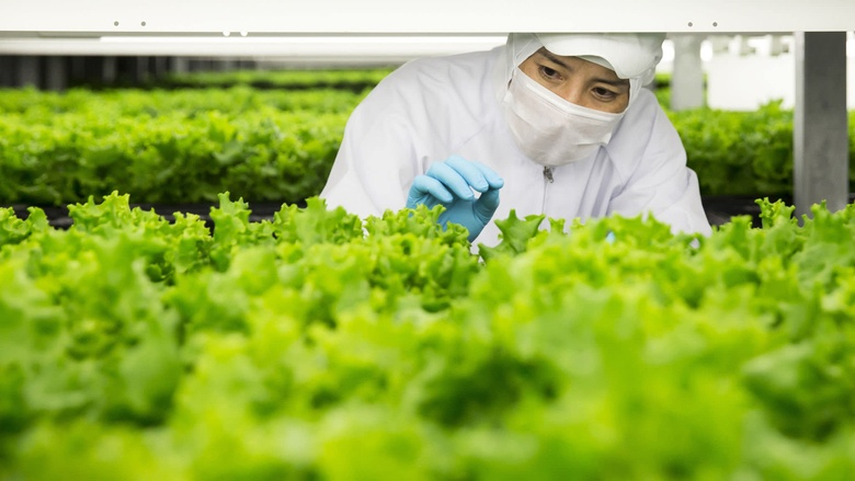 in Kameoka, Kyoto Prefecture, Japan, on Tuesday, Oct. 2, 2018. Spread is preparing to open the world's largest automated leaf-vegetable factory. It's the company's second vertical farm and could mark a turning point for vertical farming -- bringing the cost low enough to compete with traditional farms on a large scale. Photographer: Tomohiro Ohsumi/Bloomberg