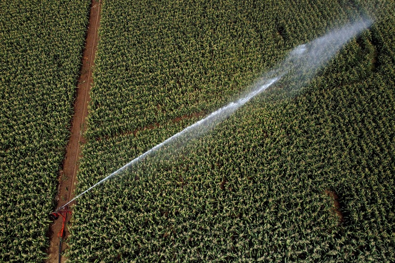 Thirsty work: a sprinkler irrigation system in France. Agriculture accounts for 70 per cent of freshwater use worldwide © Lionel Bonaventure/AFP via Getty Images